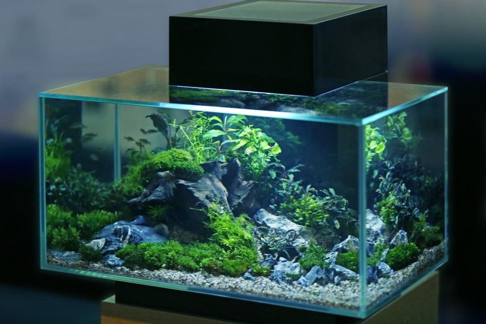 aquarium picture