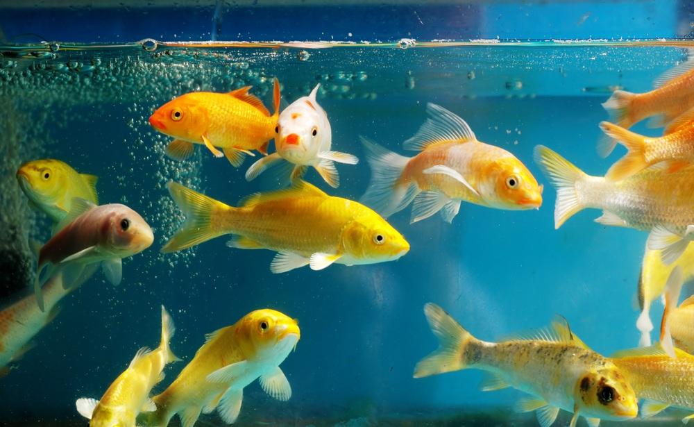taking care of fish niche