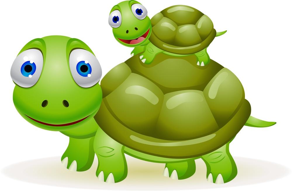 taking care of turtles